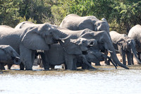 elephants at the water hole #2