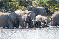 elephants at the water hole #3